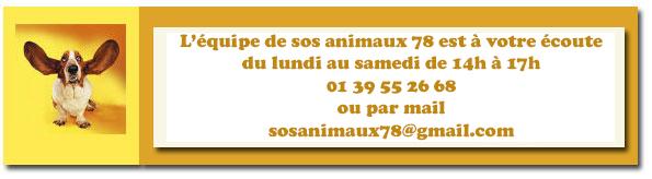 ELVIS - jack russel  lof  10 ans (8 ans de refuge) - Sos Animaux à Rocquencourt (78) Contacttel